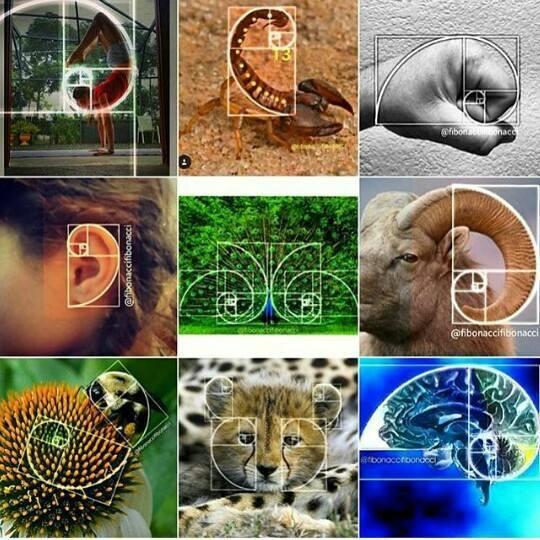 Fibonacci e la sezione aurea | Lamparole