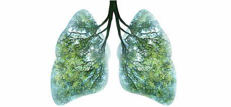 la metafisica dei polmoni